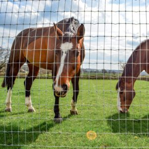 Livestock Fencing & Equipment