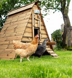 Chicken Guard 7